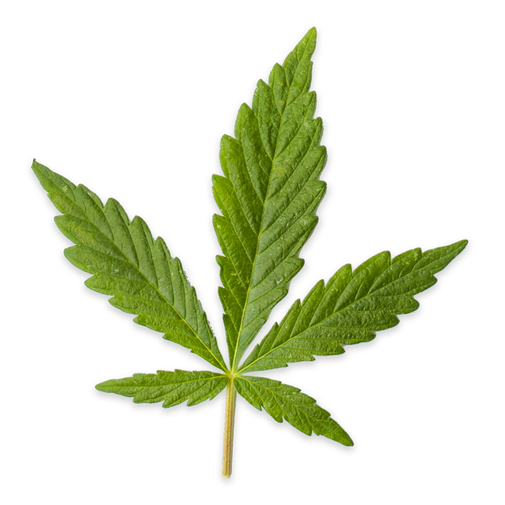 Small Cannabis leaf